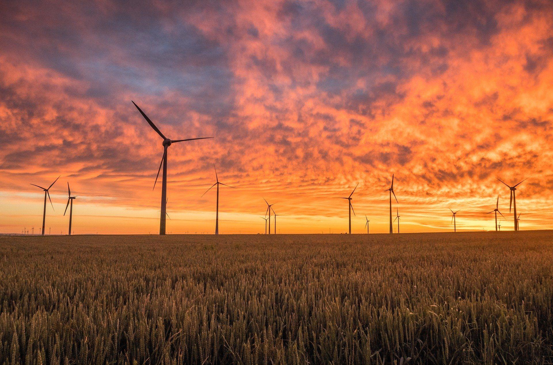 Windräder stehen verteilt auf einem Weizenfeld.
